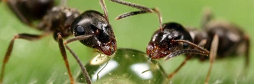 Математические формулы и муравьи