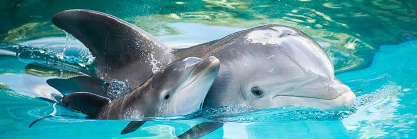 Дельфины одни из самых талантливых математиков