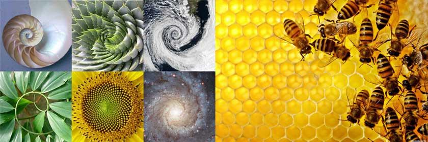 Идеальные геометрические фигуры в ботанике